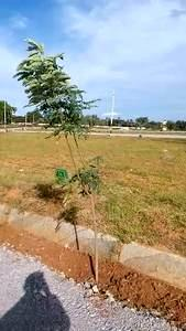 residential land, bangalore, laggere, image